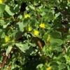 Những thành phần vitamin tốt có trong rau sam