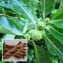 Giới thiệu tính chất dược trong cây Ba Kích Tím