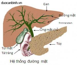 he-thong-duong-mat-07-03-2013