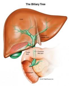 liver_large_2_12115156