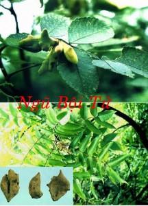 Phuong-cach-tri-benh-tieu-chay-2