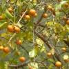 Cay-ma-tien