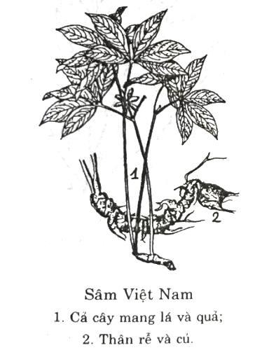sam-ngoc-linh-9505-1493808966